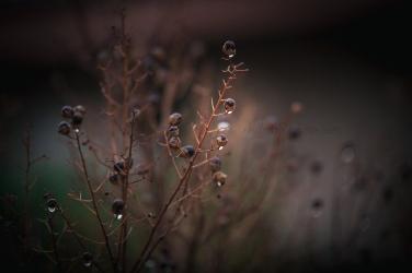 AVPhoto-0836_sml