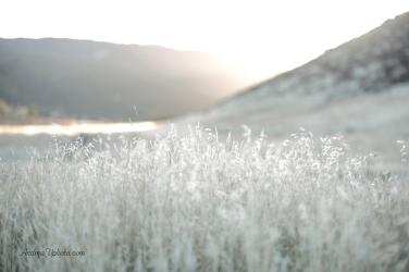 AVPhoto-1470_sml