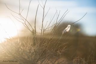 AVPhoto-1507_sml