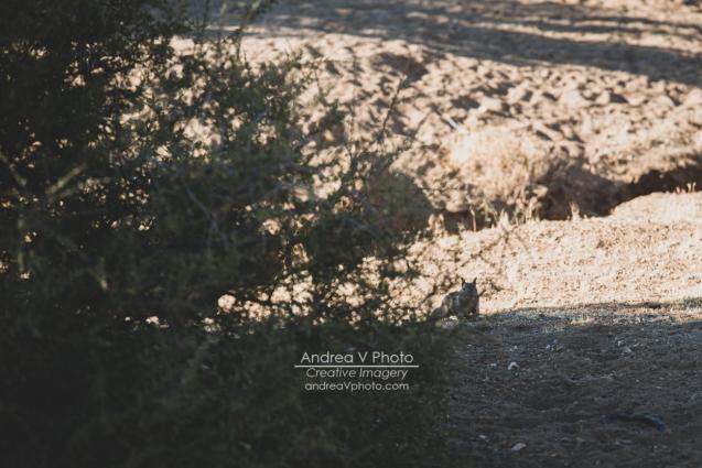 web_AVPhoto-8728
