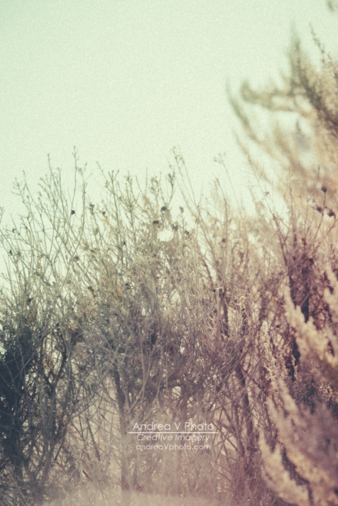 web_AVPhoto-8751
